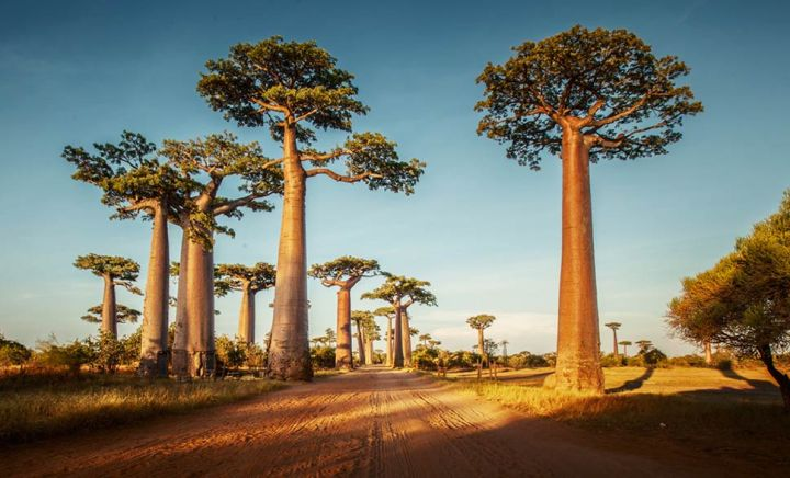 avenue-of-baobabs-madagascar-approaching-the-avenue