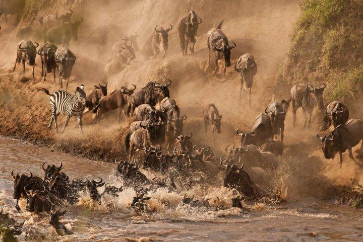 See-Wildebeest-Crossing-Mara-River-Kenya